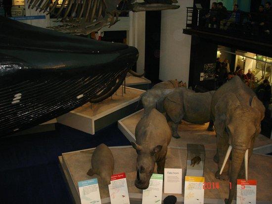 Musée d'histoire naturelle de Londres : Зал с животным миром
