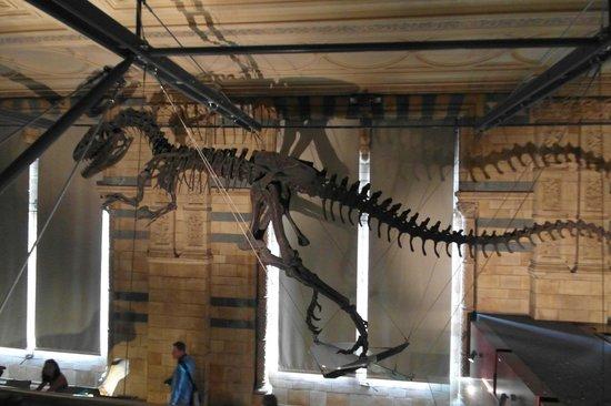 Musée d'histoire naturelle de Londres : Динозавры