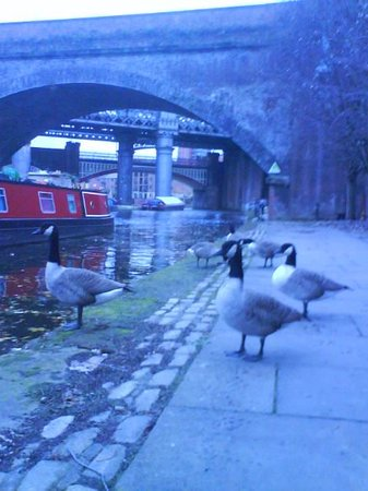 YHA Manchester: Geese on the Canal