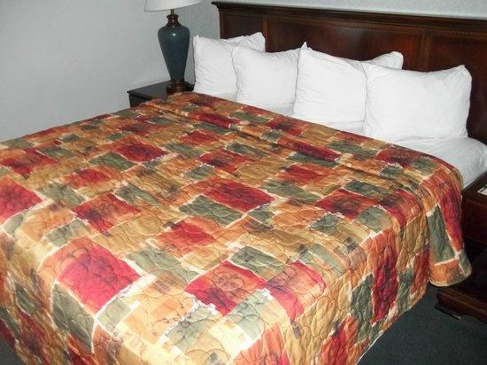 Quality Inn & Suites: Room
