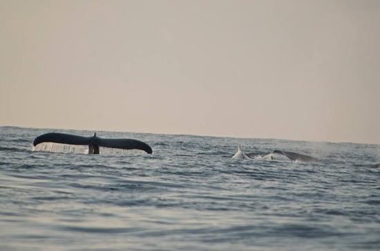 Omar's Sportfishing: humpback whale