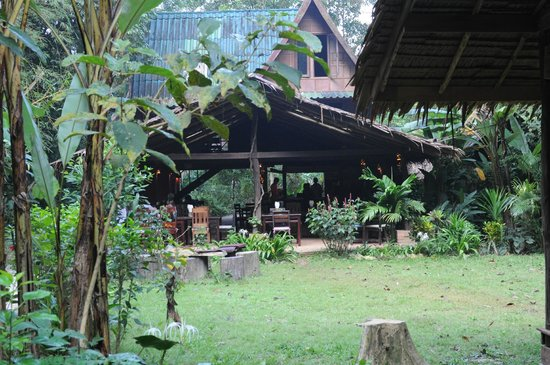 Our Jungle House: View of the restaurant