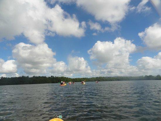 Ducos, Martinique: entre mer et mangrove
