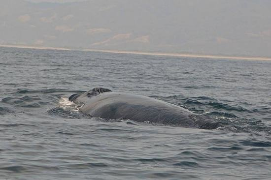 Omar's sportfishing: humpback whale up close!! mountains in the background! gorgeous!