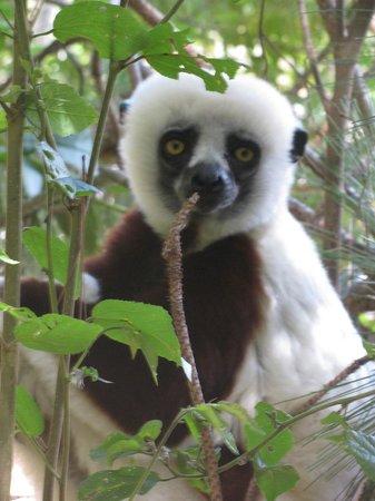 Lemurs Park : Lemur
