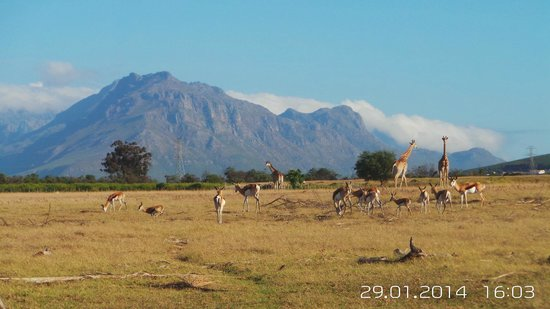 Wild Clover Farm: On the game drive