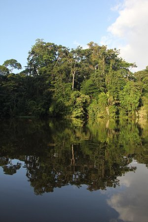Rana Roja Lodge : PARQUE NATIONAL DE TORTUGUERO