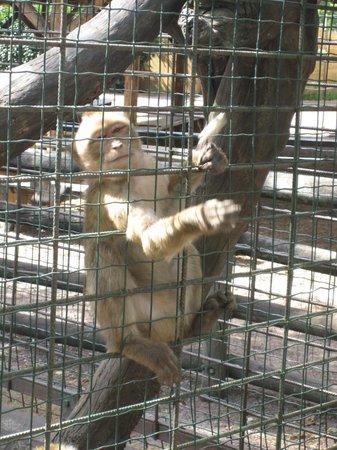 Zoo de Pessac : singe