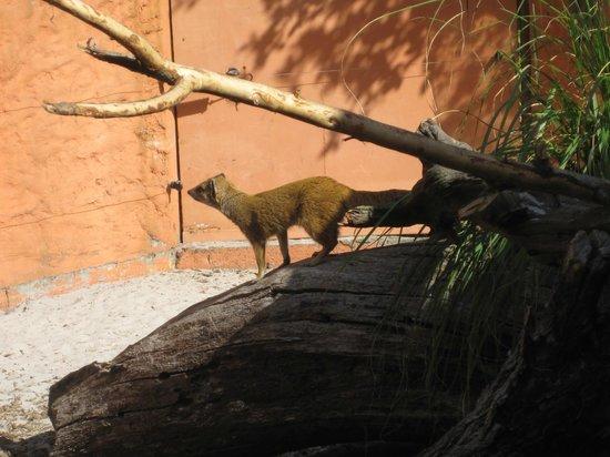 Zoo de Pessac : zoo pessac