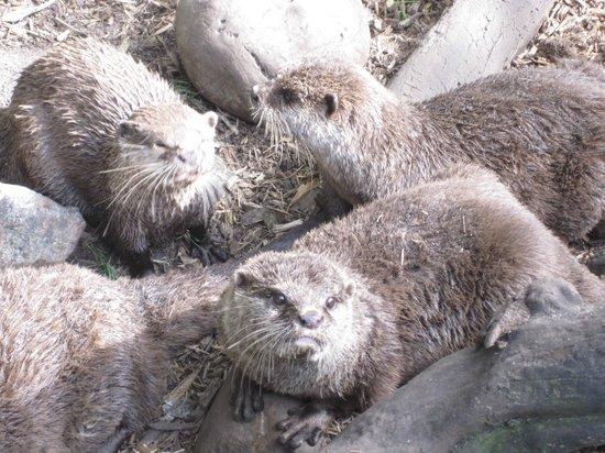 Zoo de Pessac : loutre