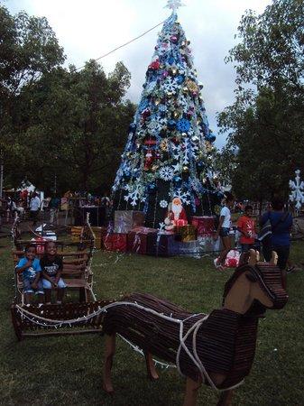 arbre de Noël du jardin de l\'Etat - Picture of Jardin de l\'Etat ...