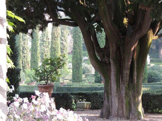 Palazzo Giardino Giusti: a beautiful view of the garden