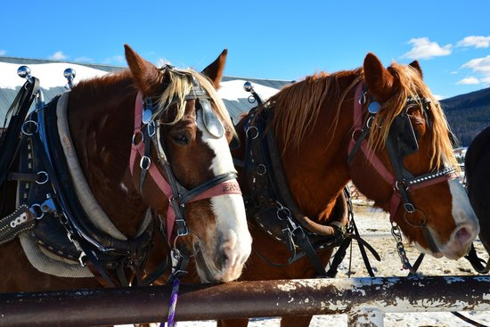 Sombrero Stables at Snow Mountain Ranch: Beautiful creatures
