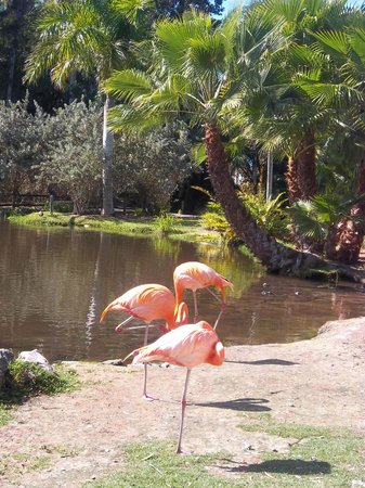 Ce N 39 Est Pas Une Peluche Picture Of Sarasota Jungle