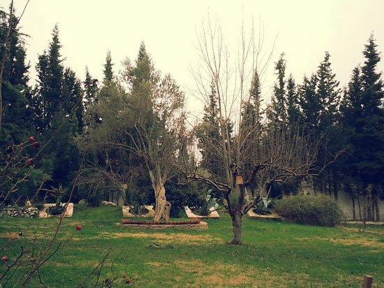 Su Perisi Hotel: Ön bahçe