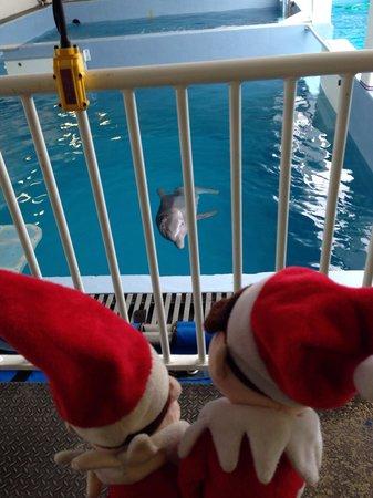 Clearwater Marine Aquarium: Winter the dolphin