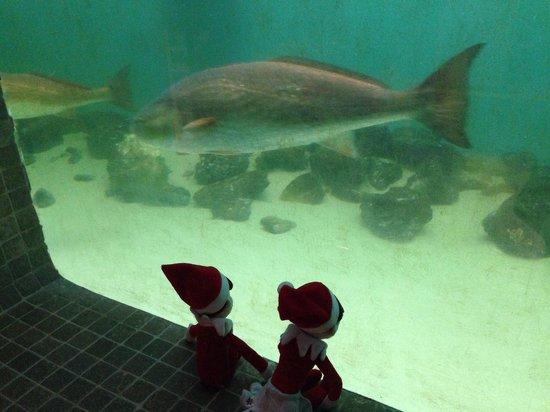 Clearwater Marine Aquarium: Big fish!
