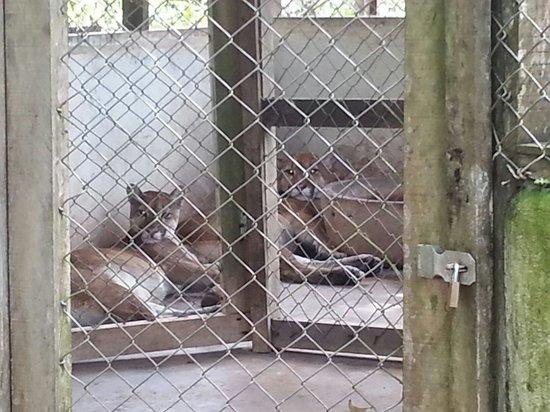 ZooFIT - Zoologico de Santarem: Zoofit Santarém. Foto larissaflorestal