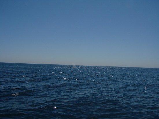Dana Point, Californien: Whale