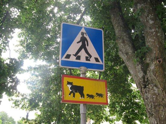Scandic Foresta : Пешеходы могут быть разными :)