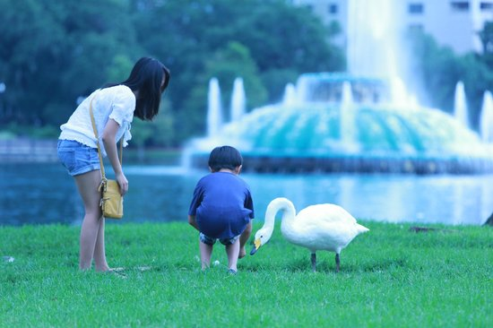 Lake Eola Park: kids playing with birds on east side of lake