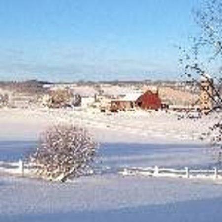 Mountain Ash Farm: View towards Escarpment and Airport Road
