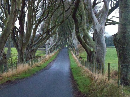 The Dark Hedges : Game of thrones