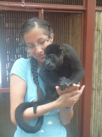 Fundación Jaguar Rescue Center: Leo (Mantled Howler Monkey) deciding if I was a good snuggle-buddy