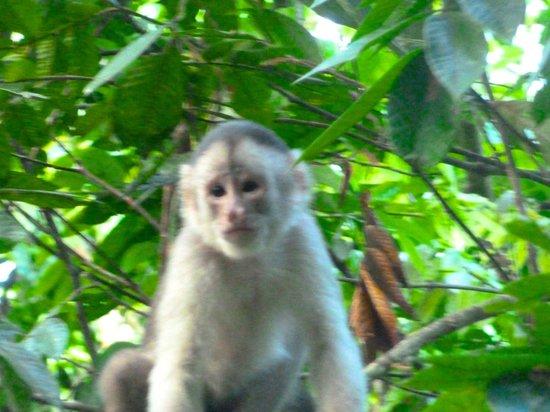 Napo Wildlife Center Ecolodge: Capuchin monkey