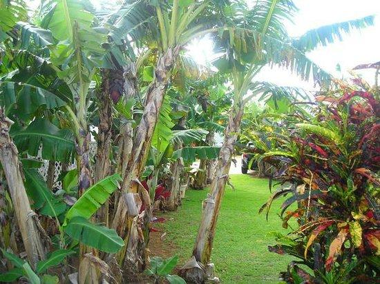 Kalaheo Inn : our peacful setting