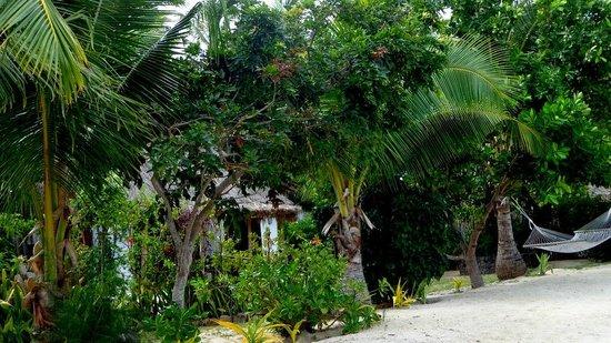 Navutu Stars Fiji Hotel & Resort: Dense vegetation provides privacy for bures