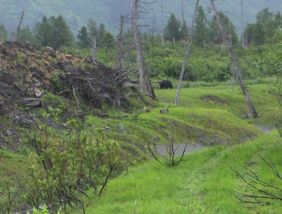 Alaska Wildlife Conservation Center: Grizzly Bear in Background August 2010