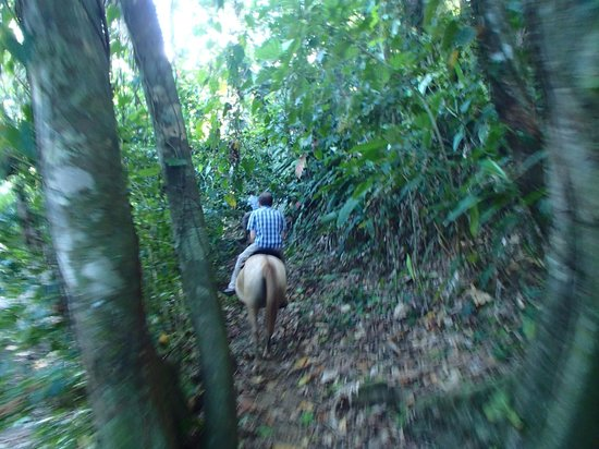 "Caribe Horse Riding Club Day Tours : Navigating through the ""jungle"""