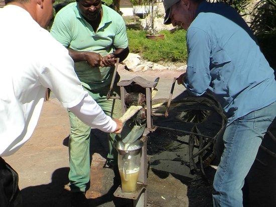 Melia Buenavista: Sugar Cane Juice!