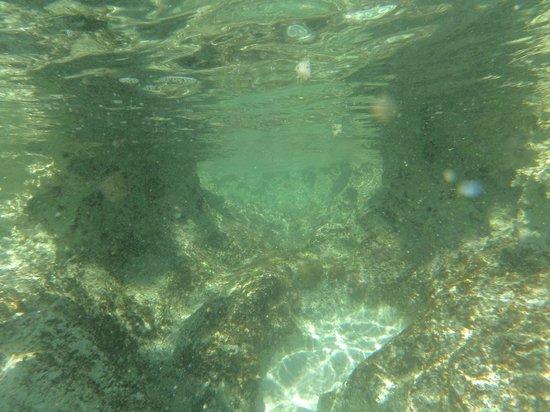 Melia Buenavista: Snorkelling beach