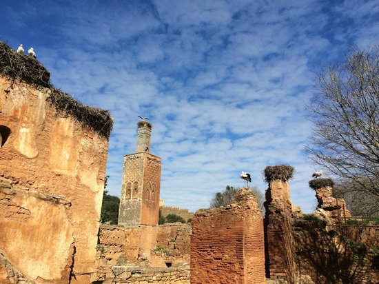 Chellah: storks and nests among the ruins