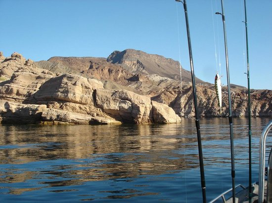 Jorge from brazil catching bass picture of las vegas for Lake mead fishing guides