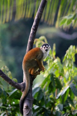 Lapa Rios Ecolodge Osa Peninsula: Love these guys