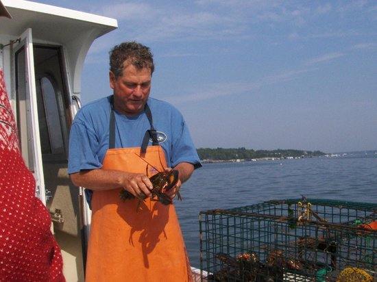 Downeast Coastal Cruises: Checking the size of the lobster