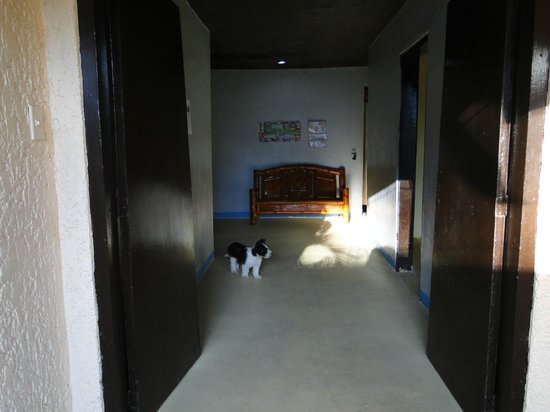 Angeles Budget Hotel: dog in hall