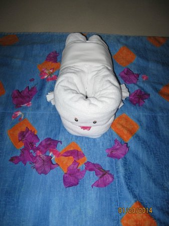 Iberostar Cozumel: Awesome towel art and petal decorations daily