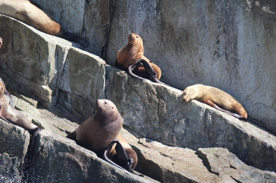 Major Marine Tours - Kenai Fjords Cruise: You scratch, I'll itch!