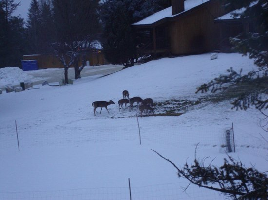 Fairmont Mountainside Vacation Villas : Break of dawn best chance