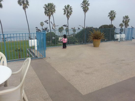 La Jolla Cove Hotel & Suites: on the terrace patio early morning