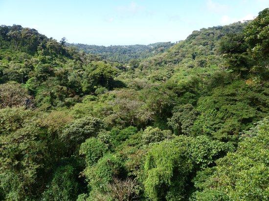 Santa Elena Skywalk : View