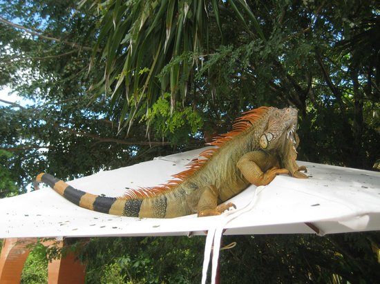 Occidental Cozumel: This guys is at the relax pool daily