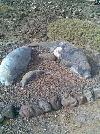 FuerteCharter: Stone seals