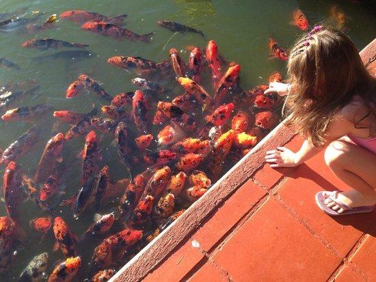 Melia Puerto Vallarta All Inclusive: koi pond