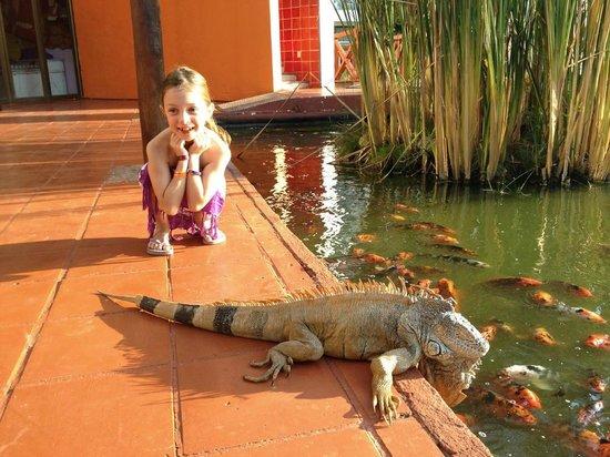 Meliá Puerto Vallarta All Inclusive: Koi ponds