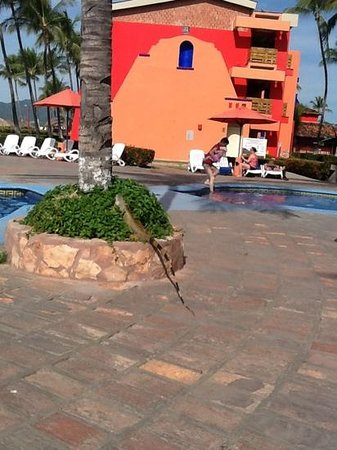 Royal Decameron Complex: by pool just never know whose going to show up